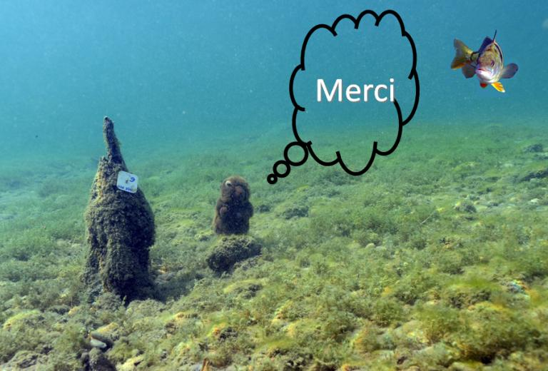 DM-merci
