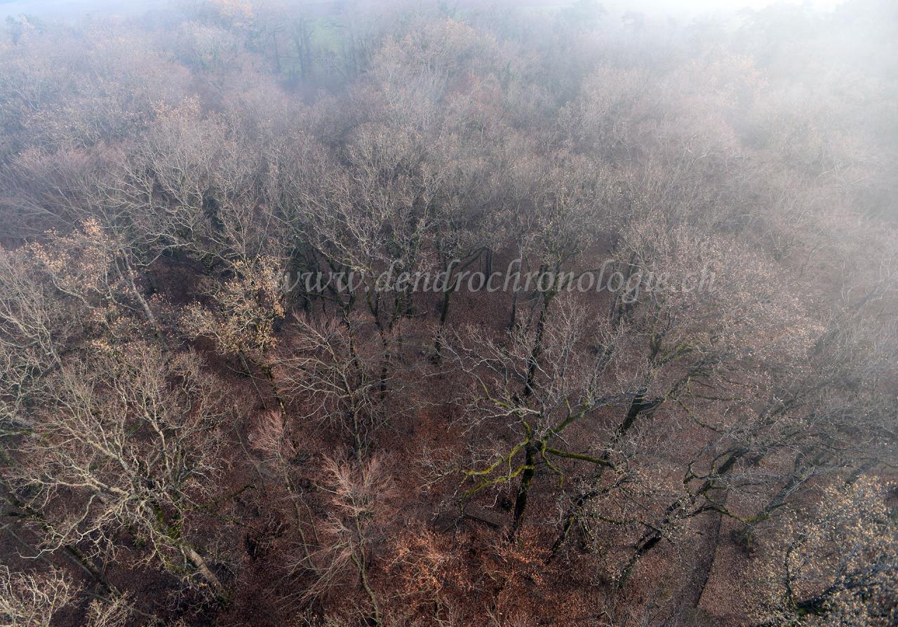 Arbres et forêts