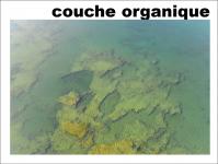 Couche organique