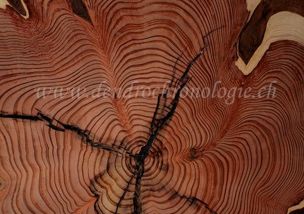 Sequoioa